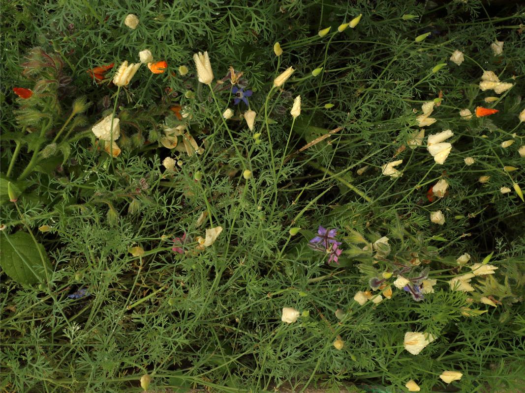 http://frederickcarnet.com/files/gimgs/234_garden17sept20199410.jpg