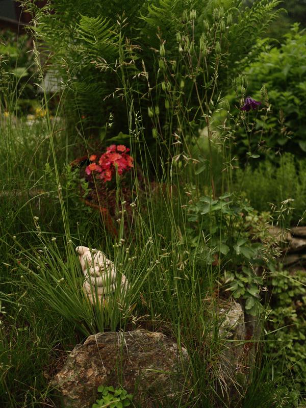 http://frederickcarnet.com/files/gimgs/239_garden14june20201918.jpg