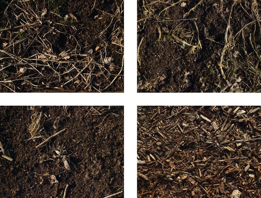 http://frederickcarnet.com/files/gimgs/239_garden2018april6934-copie.jpg