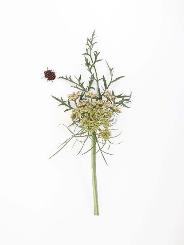 http://frederickcarnet.com/files/gimgs/239_jardinaout20202978.jpg