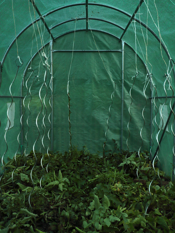 http://frederickcarnet.com/files/gimgs/239_jardinoctobre20199971.jpg